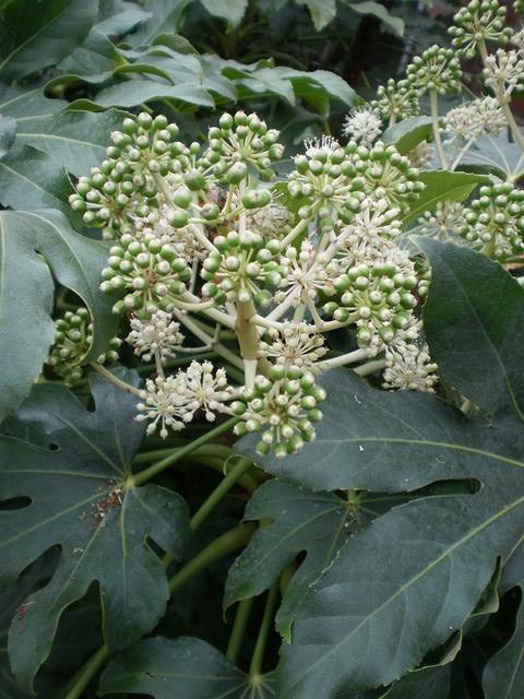 Arbres et arbustres for Plante vivace verte